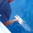 Тропическая морская рыбалка с лодки