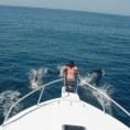 Методы поиска рыбы в океане для ловли с лодки