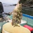 Рыбалка в заливе Никойа 2