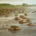 Национальный парк Тортугеро в Коста-Рике