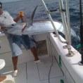 Лучшая морская рыбалка - голубой марлин