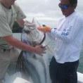 Ловля рыбы-петуха