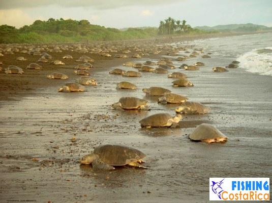 Пейзажи Коста-Рики 1