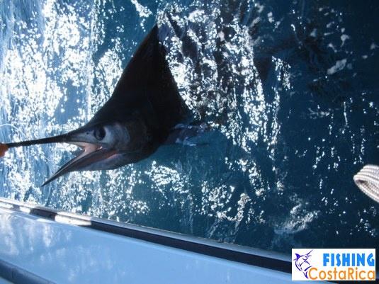 Рыбалка на океане - Коста-Рика 5