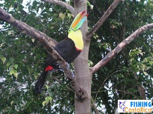 Птицы Коста-Рики 0