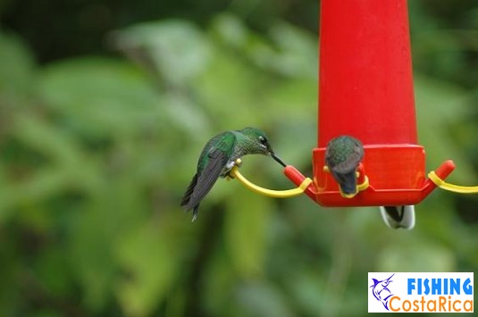 Птицы Коста-Рики 2
