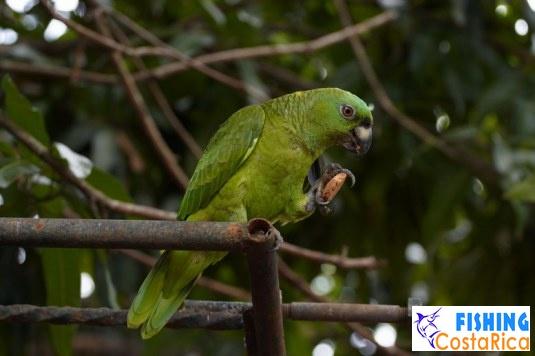 Птицы Коста-Рики 3