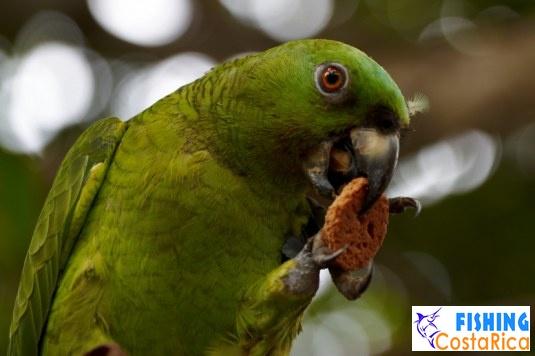 Птицы Коста-Рики 4