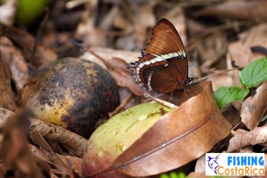 Насекомые Коста-Рики 4