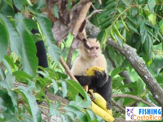 Живность Коста-Рики 4