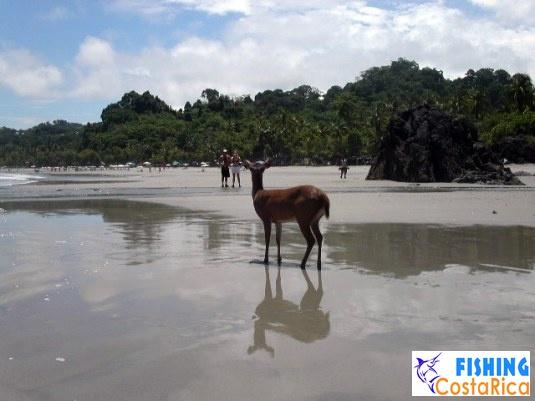 Живность Коста-Рики 7