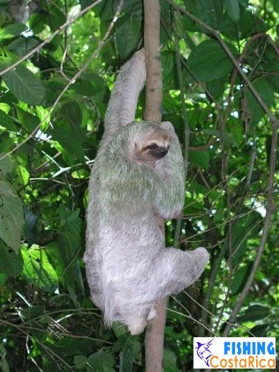 Живность Коста-Рики 8