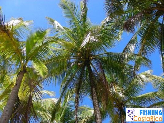 Растительность Коста-Рики 3