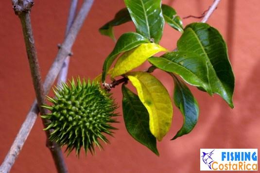 Растительность Коста-Рики 6