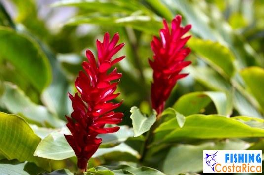 Растительность Коста-Рики 7