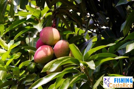 Растительность Коста-Рики 9