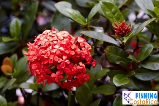 Растительный мир Коста-Рики 2