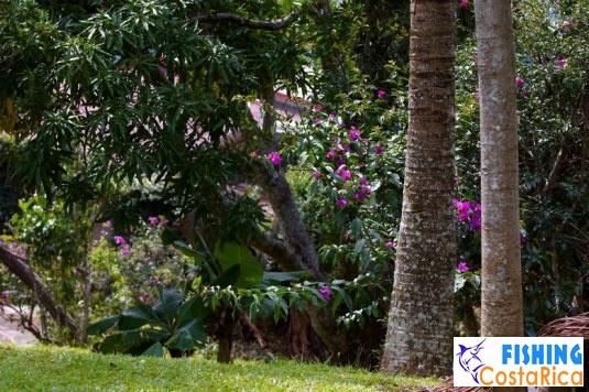 Растительный мир Коста-Рики 5