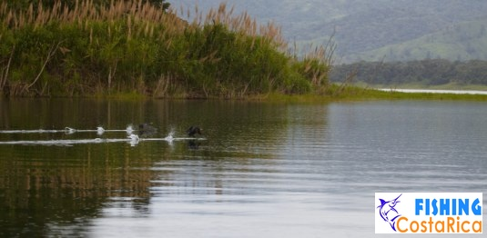 Озеро Аренал и Вулкан Аренал 4