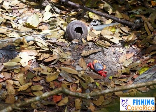 Животный мир - Коста-Рика 0