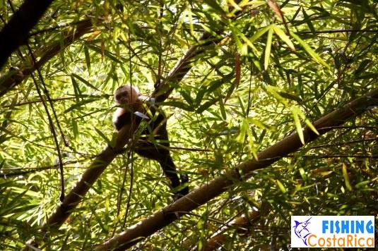 Животный мир - Коста-Рика 1