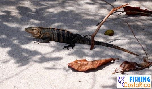Животный мир - Коста-Рика 4