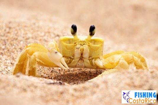 Животный мир - Коста-Рика 5