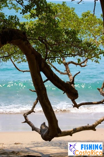Пляжи национального парка Мануэль Антонио